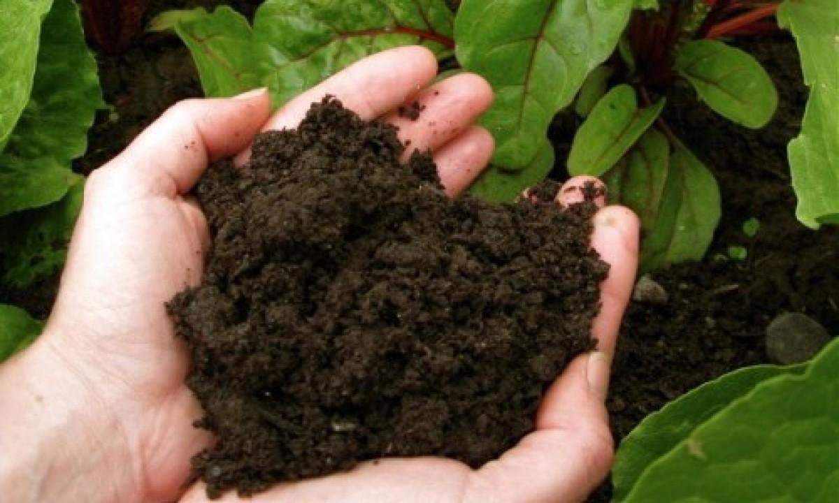 Cung cấp nguyên liệu than bùn làm phân bón hữu cơ, vi sinh