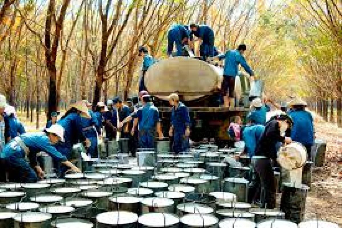 Xuất khẩu cao su vẫn 'trông' chính vào Trung Quốc